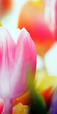 Цветущая весна Фотообои VIP 294см х 260см Тула