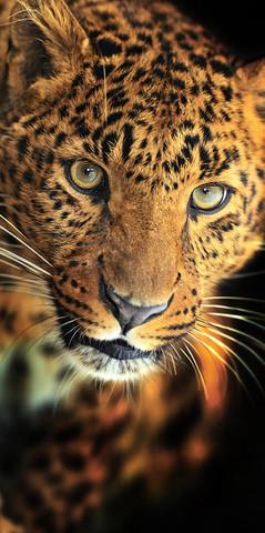 А-003 Леопард 100*270см ФОТОПАННО