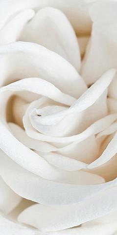 А-061 Роза Белая 200*147 см ФОТОПАННО