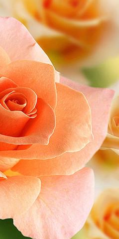 А1-056 Розы 200*147см ФОТОПАННО