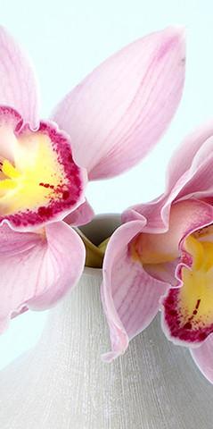 С-320 Орхидея 3 200*147 см ФОТОПАННО